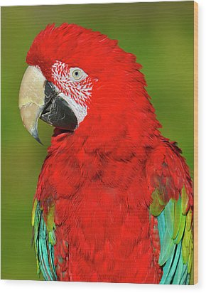 Wood Print featuring the photograph Red And Green by Tony Beck
