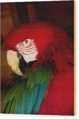 Red And Green Wing Macaw Wood Print