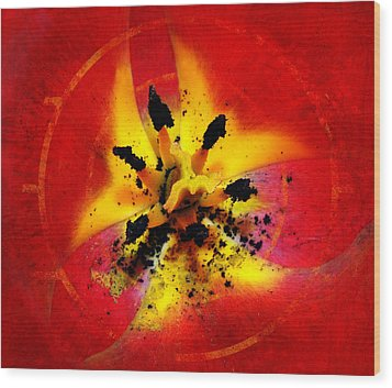 Red And Yellow Flower Wood Print by Judi Saunders
