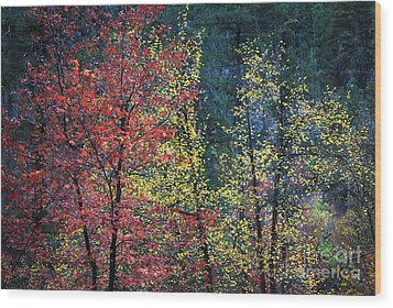 Red And Yellow Leaves Abstract Horizontal Number 1 Wood Print by Heather Kirk