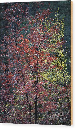 Red And Yellow Leaves Abstract Vertical Number 1 Wood Print by Heather Kirk