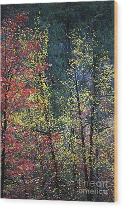 Red And Yellow Leaves Abstract Vertical Number 2 Wood Print by Heather Kirk