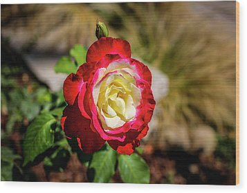 Red And Yellow Rose Wood Print