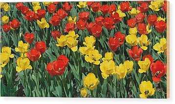 Red And Yellow Tulips  Naperville Illinois Wood Print by Michael Bessler
