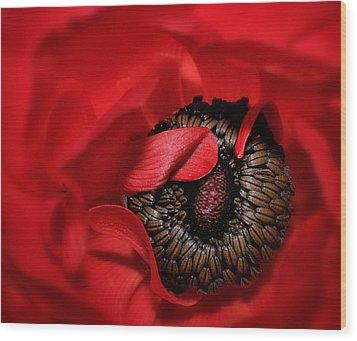 Red Anemone Wood Print