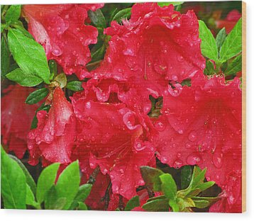 Red Azaleas Wood Print by Richard Singleton