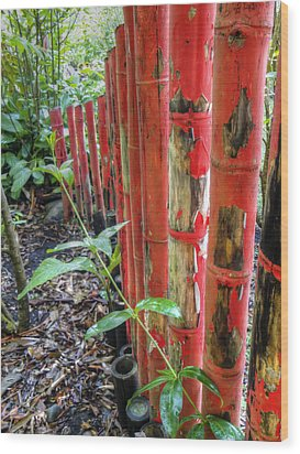 Red Bamboo Wood Print by Dolly Sanchez