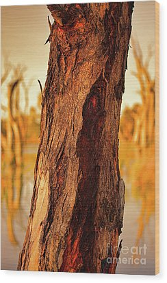 Wood Print featuring the photograph Red Bark by Douglas Barnard