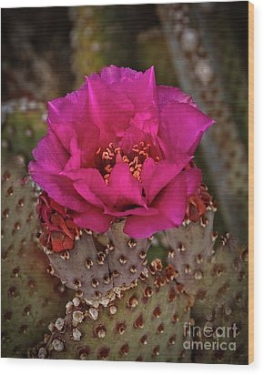 Wood Print featuring the photograph Red Beavertail Cactus Bloom by Robert Bales
