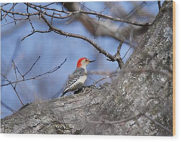 Wood Print featuring the photograph Red-bellied Woodpecker 1134 by Michael Peychich