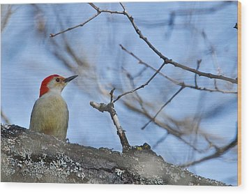 Wood Print featuring the photograph Red-bellied Woodpecker 1137 by Michael Peychich