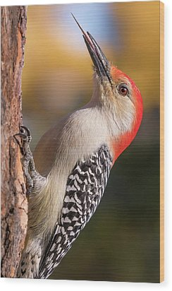 Wood Print featuring the photograph Red Bellied Woodpecker's Toolkit by Jim Hughes