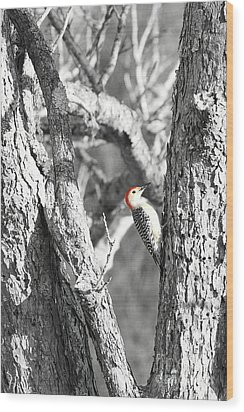 Wood Print featuring the photograph Red-bellied Woodpecker by Benanne Stiens