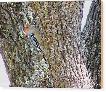 Wood Print featuring the photograph Red-bellied Woodpecker By Bill Holkham by Bill Holkham