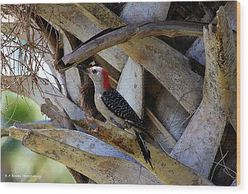 Wood Print featuring the photograph Red-bellied Woodpecker Hides On A Cabbage Palm by Barbara Bowen