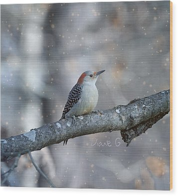 Red-bellied Woodpecker In Snow Wood Print by Diane Giurco