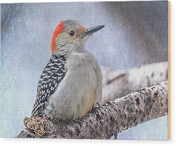 Red-bellied Woodpecker Wood Print by Patti Deters