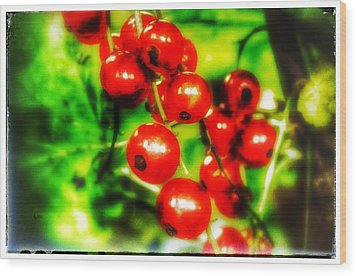 Wood Print featuring the photograph Red Berries by Isabella F Abbie Shores FRSA