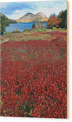 Red Berry Bushes At Jordan Pond Wood Print by George Oze