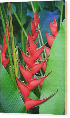 Red Bird Of Paradise Wood Print by Stephen Mack