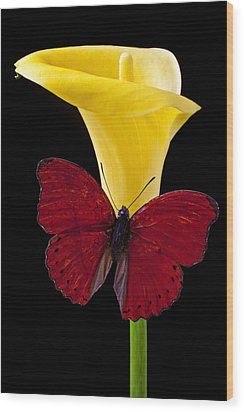 Red Butterfly And Calla Lily Wood Print by Garry Gay