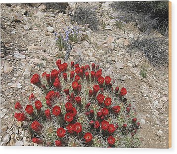 Red Cactus Flowers Wood Print by Joan Taylor-Sullivant
