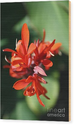 Red Canna Flower Wood Print by John W Smith III