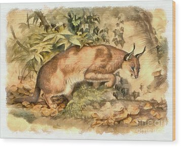 Red Caracal Wood Print