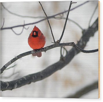 Wood Print featuring the photograph Red Cardinal In Snow by Marie Hicks
