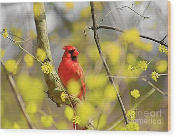 Wood Print featuring the photograph Red Cardinal Among Spring Flowers by Charline Xia