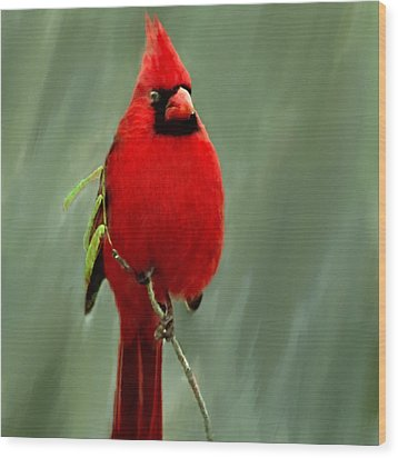 Red Cardinal Painting Wood Print by Bob and Nadine Johnston
