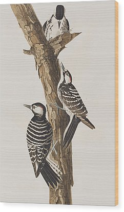 Red-cockaded Woodpecker Wood Print by John James Audubon