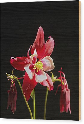 Red Columbine Flower Wood Print by Christina Lihani