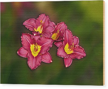 Wood Print featuring the photograph Red Columbine Hybrid by John Haldane
