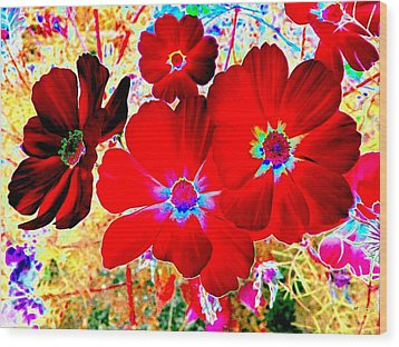 Red Cosmos Wood Print by Will Borden