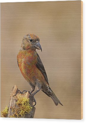 Red Crossbill Wood Print by Doug Herr