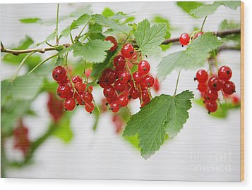 Red Currant Wood Print