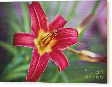 Red Daylily Wood Print by Ryan Kelly