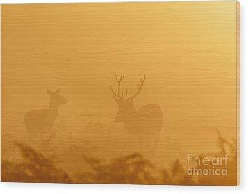 Red Deer At Sunrise Wood Print