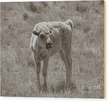 Wood Print featuring the photograph Red Dog Buffalo Calf by Rebecca Margraf