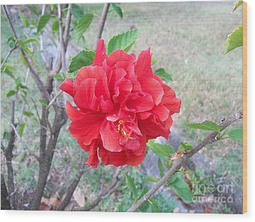 Red Double Hibiscus Wood Print