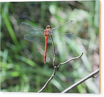 Wood Print featuring the photograph Red Dragonfly by Karen Silvestri