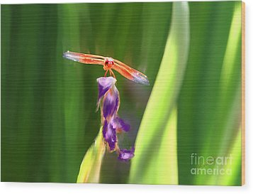 Red Dragonfly On Purple Flower Wood Print