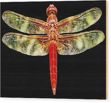 Red Dragonfly Wood Print by Tony Grider