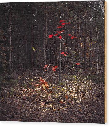 Red Drops Wood Print