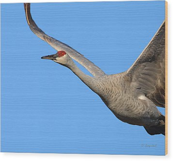 Wood Print featuring the photograph Red Eye Flight by Gerry Sibell