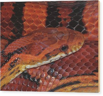 Red Eyed Snake Wood Print by Patricia McNaught Foster