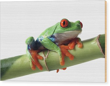 Red-eyed Tree Frog Wood Print by Mlorenzphotography