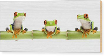 Red-eyed Treefrogs Wood Print by Mark Bowler and Photo Researchers