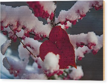 Red Fall Leaf On Snowy Red Berries Wood Print